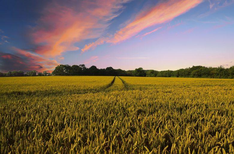 Wat je moet weten als je een boerderij wilt beginnen